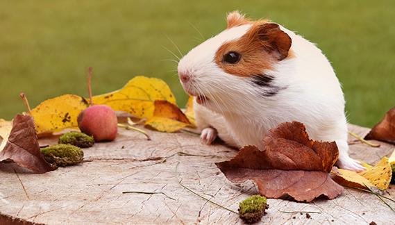 accessori per criceti, conigli e roditori