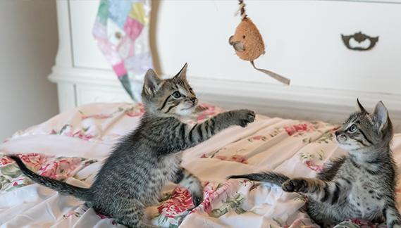 accessori per gatti tiragraffi - cucce - portantine