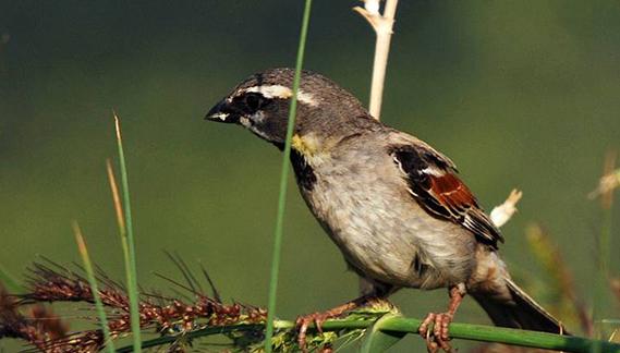 accessori per uccelli da richiamo