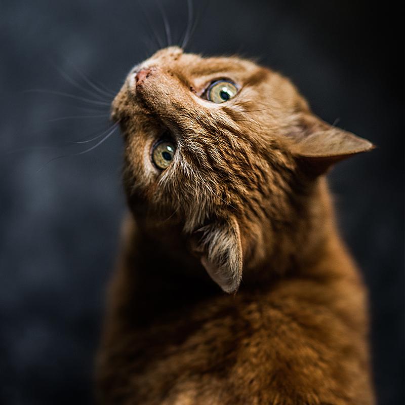 mangimi per gatti marca gran forma
