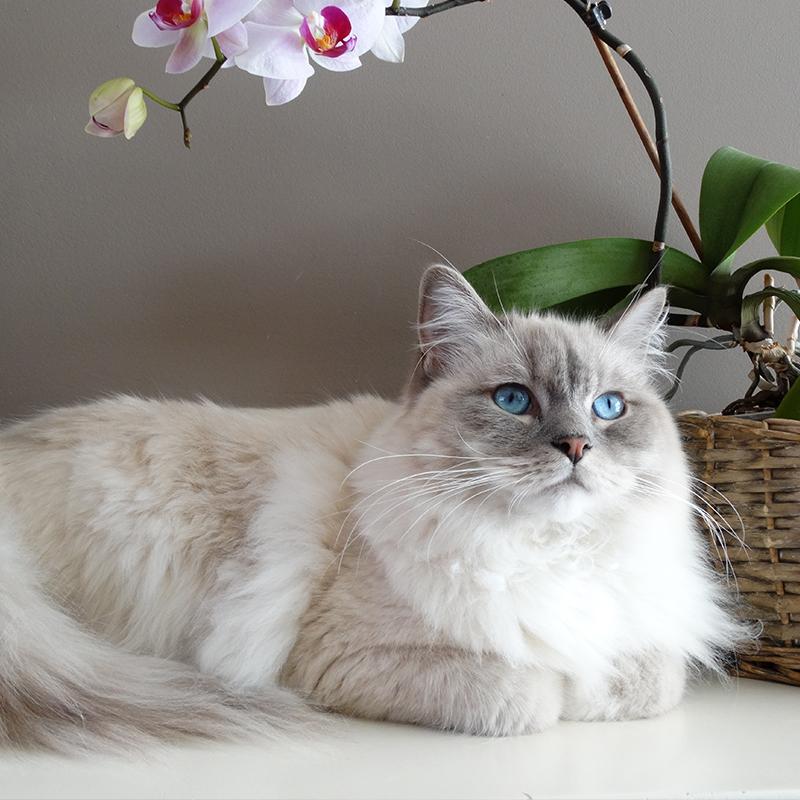 mangimi per gatto marca morando
