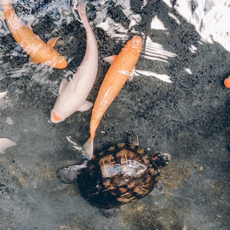 Mangimi per pesci e tartarughe